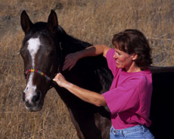 Dr Deb Sell adjusting a horse